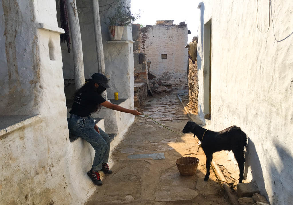 Priya playing with a goat
