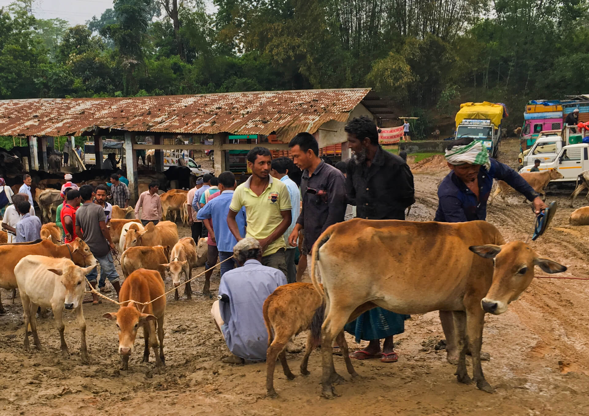 Men with cattle at a cattle market with a large shed in the background.