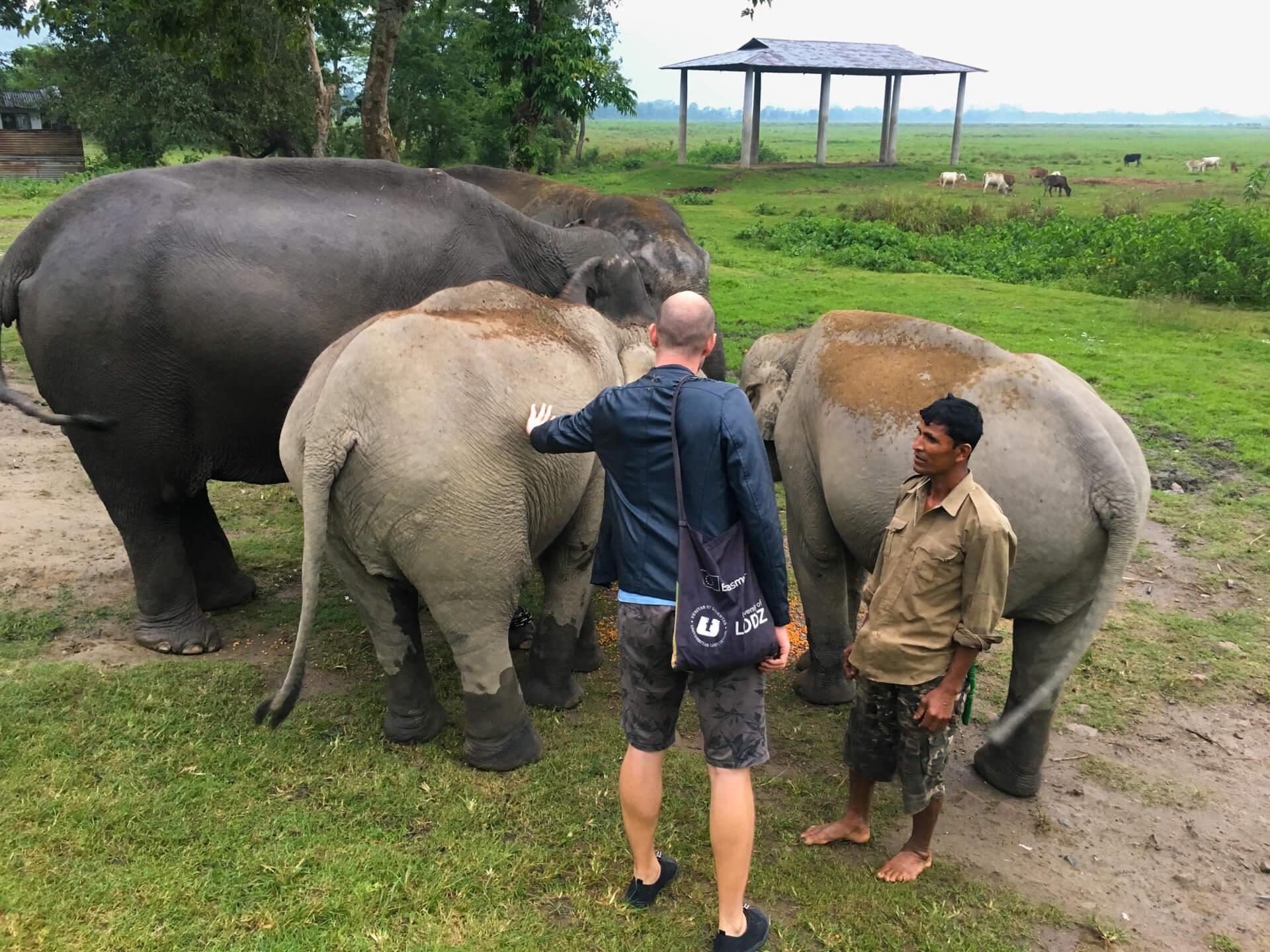 Me patting one of three elephants that are feeding.