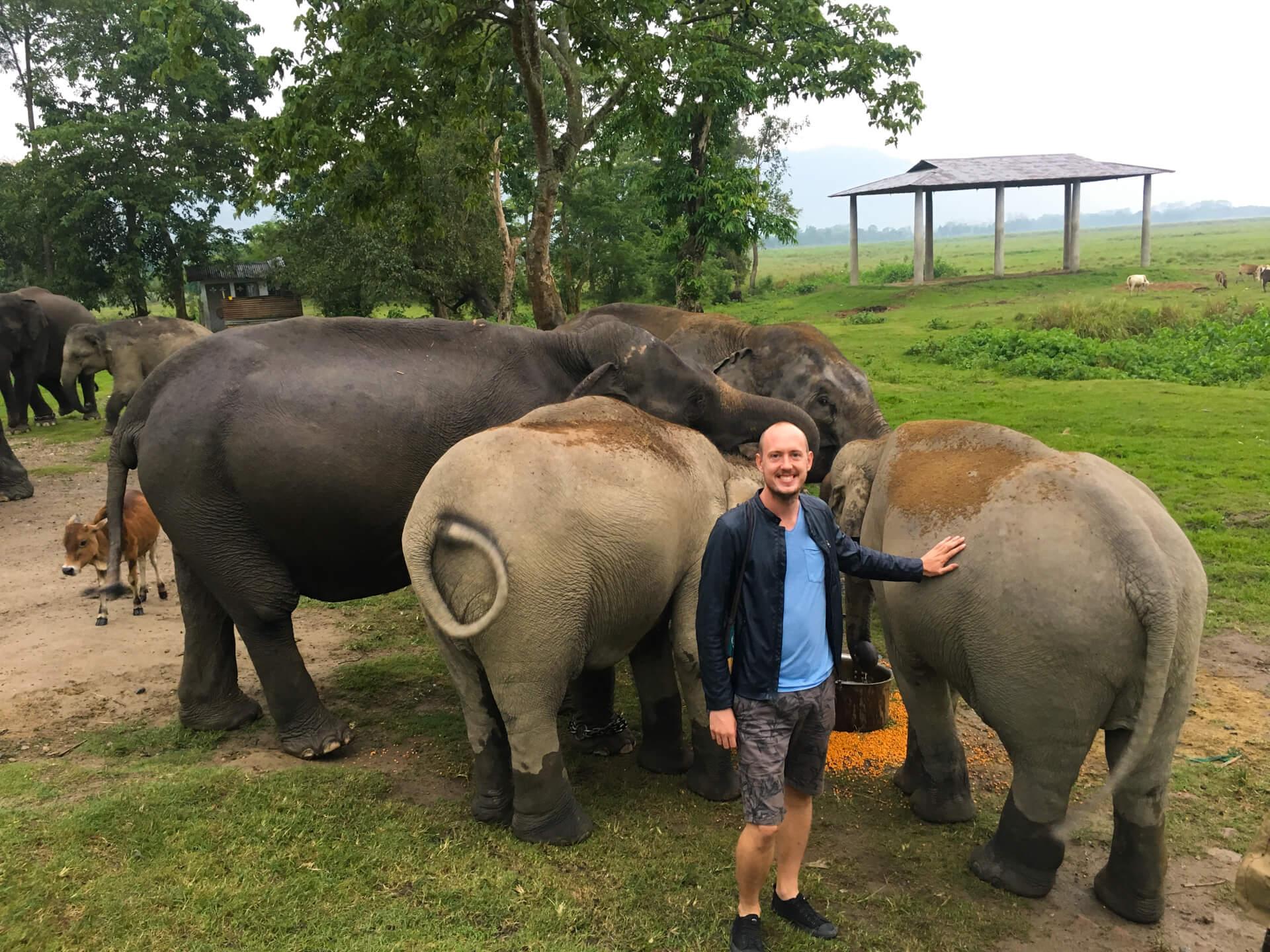 Me standing with three elephants.